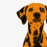 dog-sounds