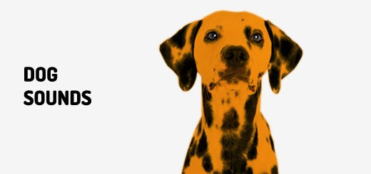 Dog Sounds | Orange Free Sounds