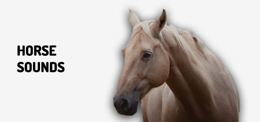 Horse Sounds Related Keywords - Horse Sounds Long Tail ... - photo#31