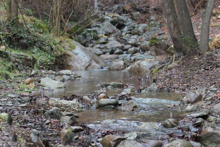 Forest Stream, Running Water Sound | Free Sound Clips